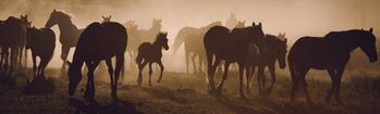 National Geographic Mustangs in the Mist Rear Window Decal