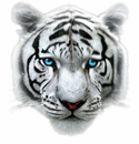 Big Cats!<br>Tigers Lions Panthers