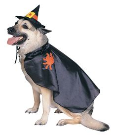 NEW! Witch Pet Halloween Costume Size S