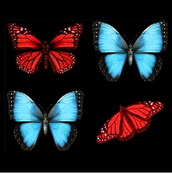 SALE! Puffy Blue & Red Butterflies Plus Size & Supersize T-Shirts S M L XL 2x 3x 4x 5x 6x 7x 8x