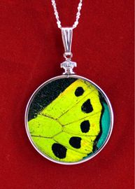 Birdwing Authentic Butterfly Wing Sterling Silver Pendant Necklace