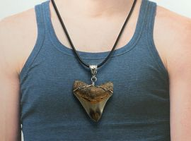 Carcharodon Megalodon Shark Tooth Jewelry Pendant Necklace Large 08818