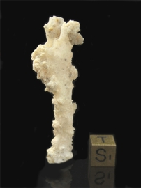 "Fulgurite Lightning Sand ""The Poodle"""