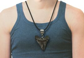 Authentic Carcharodon Megalodon Jewelry Shark Tooth Necklace Large 9204
