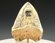 Megalodon Shark Tooth Scrimshaw Carcharocles Megalodon New Caledonia