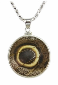 Owl Eye Butterfly Wing Jewelry