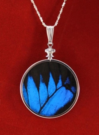 Authentic Butterfly Wing Jewelry