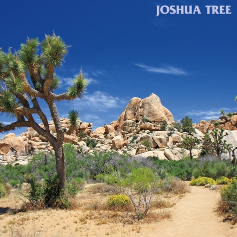 California: Joshua Tree 12 x 12 Paper