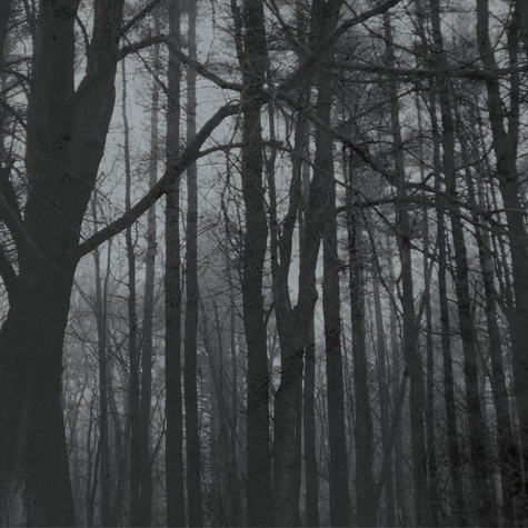 Horror: Haunted Forest 12 x 12 Paper