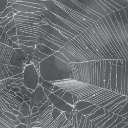 Horror: Spider Web 12 x 12 Paper
