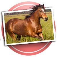 Horseback Riding Scrapbooking!