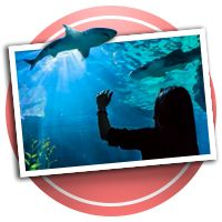 Sea World & Discovery Cove Scrapbooking