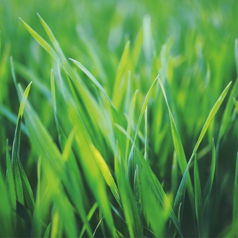 Spring: Blades of Grass 12 x 12 Paper