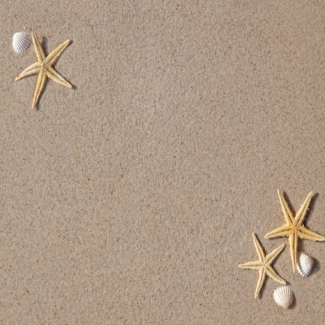 Three Starfish 12 x 12 Paper
