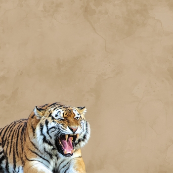 Zoo Animals: Tiger 12 x 12 Paper