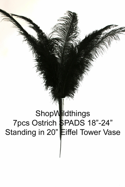 "Coming Soon!  Black Ostrich Feathers 18"" -24"" - SPADS"