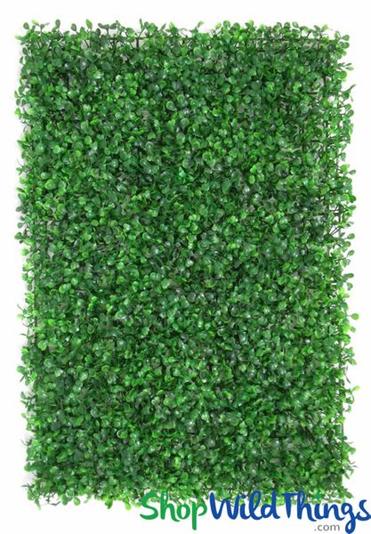 "Common Boxwood Wall Mat Greenery Wall - 23 1/2"" x 16"""
