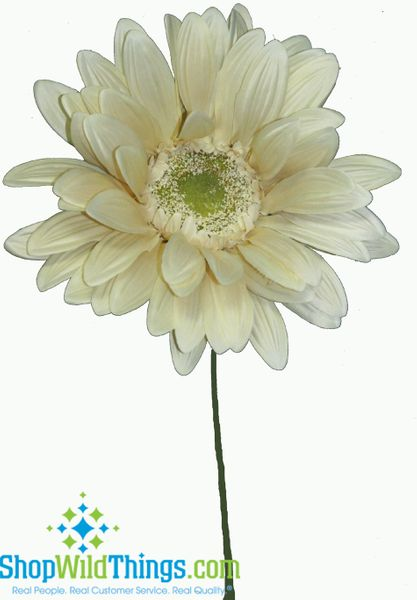"COMING SOON! CLEARANCE- Gerber Daisy - Huge Flower - Cream 29"" x 8"""