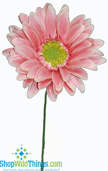 "COMING SOON! CLEARANCE! Gerber Daisy - Huge Flower - Pink 27""  x 11.5"""