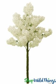 Flowering Dogwood Tree - 6 Feet Tall - Cream