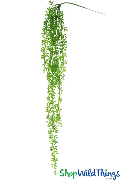 """Donkey Tail Trailing Succulent Vine _ 40"""" Draping Greenery"""