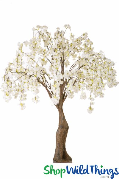 COMING SOON! Flowering Cherry Blossom Tree Extra-Full - 6' Tall - Cream