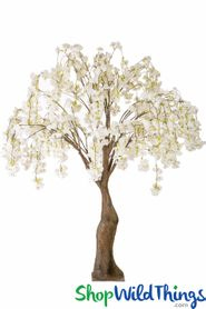 Flowering Cherry Blossom Tree Extra-Full - 6' Tall - Cream