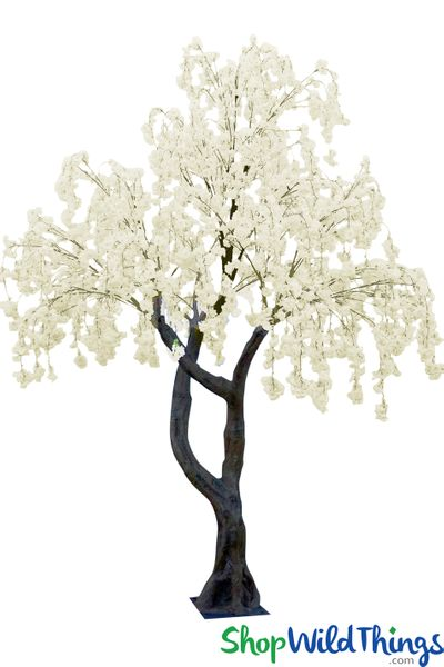 Flowering Cherry Blossom Tree � Forked Trunk - 10' Tall � Cream