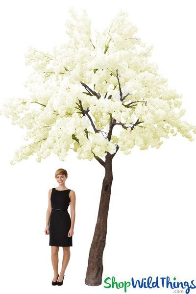 Flowering Dogwood Tree � 14' Tall x 13' Wide � Cream