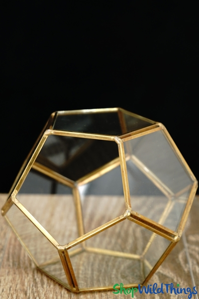 COMING SOON! Geometric Pentagon Terrarium & Candle Holder - Gold - 4 3/4""