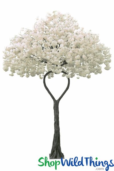 Flowering Dogwood Tree - Ivory - Heart Shaped Trunk - 12 Feet Tall