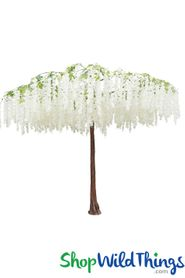 Flowering Weeping Cherry Tree Canopy � White � 9.8 Feet Tall x 12 Feet Wide