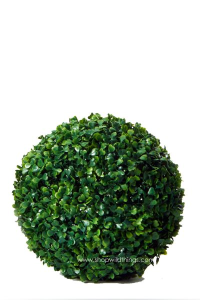 Kissing Ball Plant Topiary Boxwood - 10""