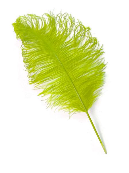 "SALE ! Lime Green Ostrich Feathers 13"" - 15"" - SPADS"