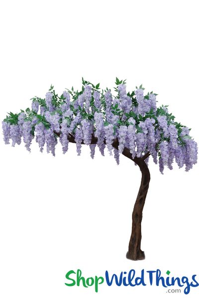 "COMING SOON! Flowering Wisteria Tree - Purple - 7 Feet Tall x 6.5 Feet Wide ""Sideswept"""