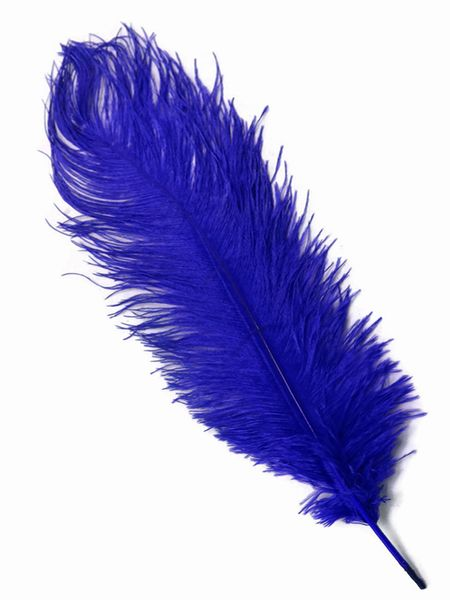 "SALE ! Royal Blue Ostrich Feathers 13"" - 15"" - SPADS"