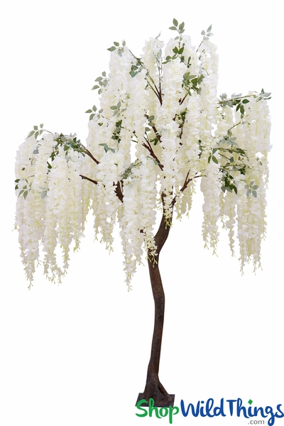 Snow Fountain Cream Flowering Weeping Cherry Tree - 8 Feet Tall