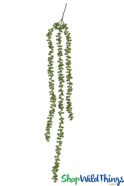 """String of Pearls Trailing Succulent Vine - 30"""" Draping Greenery"""