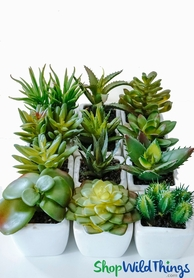 "Succulents in Pots - 12 Assorted Mini Faux Plants - 2"" x 3-4"""