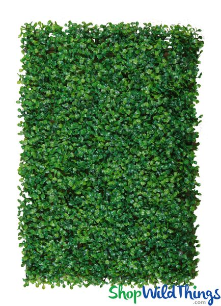 "COMING SOON! Variegated Common Boxwood Wall Mat Greenery Wall � 24"" x 16"""