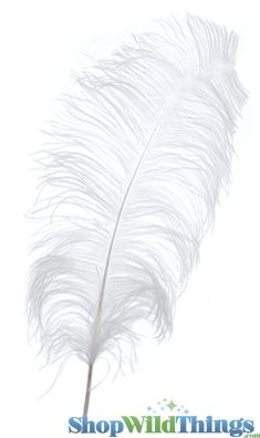 "COMING SOON! White Ostrich Feathers 13"" - 15"" - SPADS"
