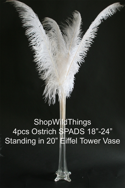 "Coming Soon!  White Ostrich Feathers - 18-24"" - SPADS"