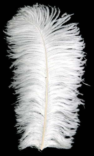"Coming Soon!  White Ostrich Feathers - 18"" -30"" - Prime Femina Plumes"