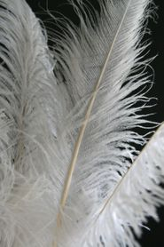 "White Ostrich Feathers 23"" - 26"" - SPADS"