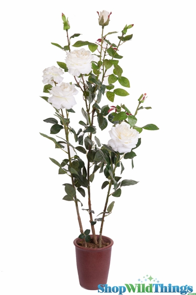 "COMING SOON! Rose Bush in Ceramic Pot - Lifesize 49""H White - High Quality Silk Roses"