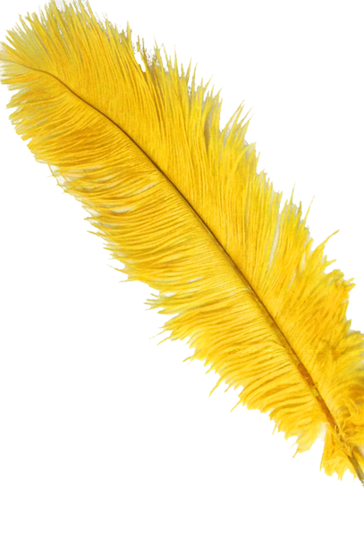"Yellow Gold Ostrich Feathers 29""-32"" - SPADS"