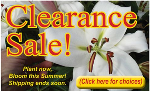 'A Spring Clearance Sale'