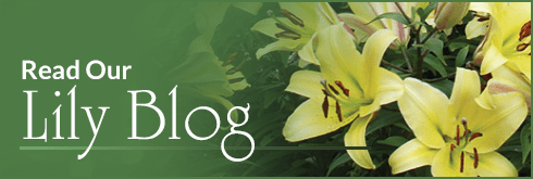 Read Our Lily Blog