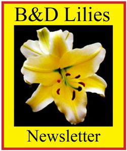 Subscribe to our e-mailed Newsletter