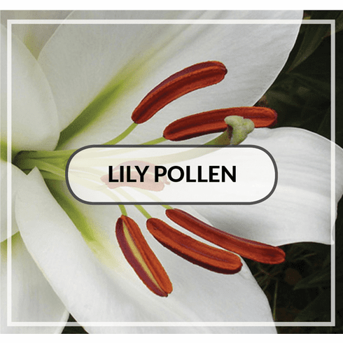 How to Clean up Pollen